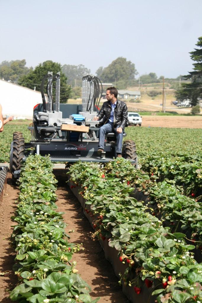 O Agrobot, inventado por Juan Bravo, pronto para colher os morangos numa plantação no Estado da Califórnia (EUA).
