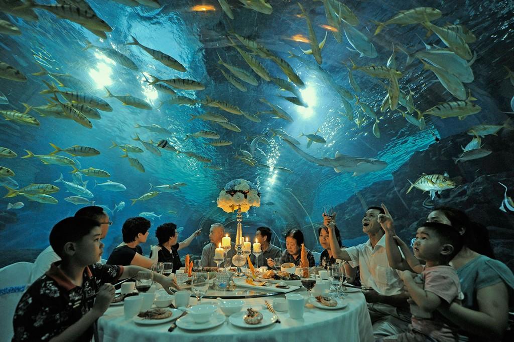 Um jantar em um ambiente no mínimo exótico, ou seja, no qual os mais variados peixes ornamentam o entorno do jantar dessa família chinesa, no Tianjin Haichang Polar Ocean World, no porto de Tianjin (China) em 3/9/2014.